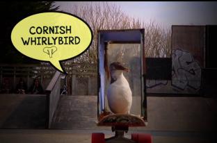 Cornish Whirlybird - Elephant Distribution
